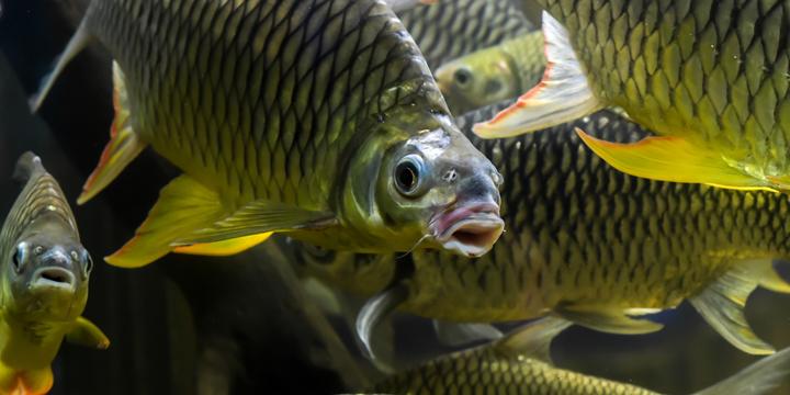 US Aquaculture Market Trends
